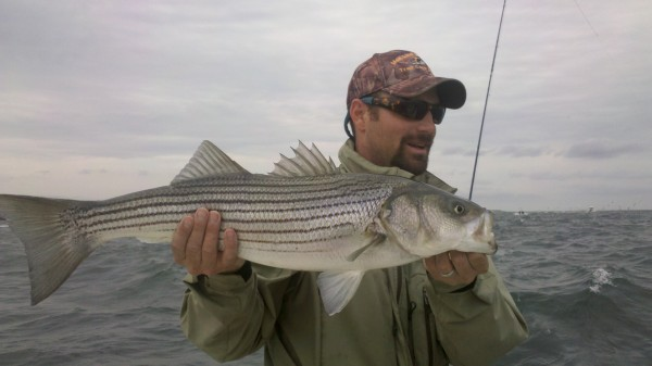 Shooting heads helped wrangle this striper.