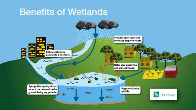 More than three billion people, around half the world's population, obtain their basic water needs from inland freshwater wetlands.