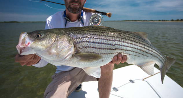 Coming Soon: Stripers in the skinny water