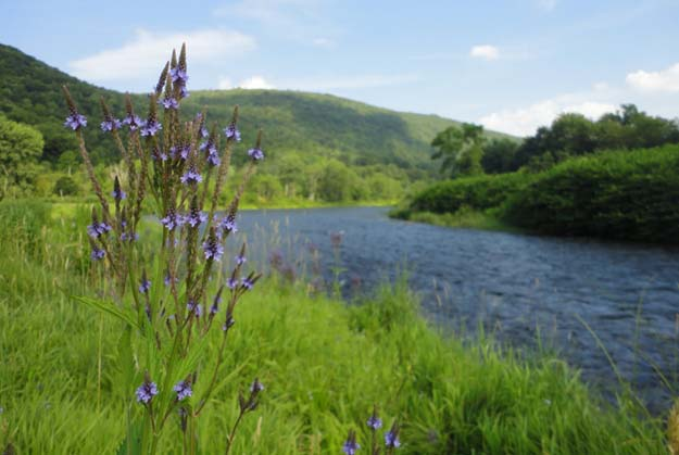 Right Now: Help the Upper Delaware River!