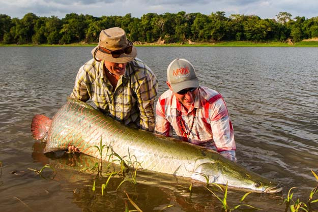 The Amazon's biggest fish on a fly