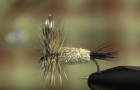 At The Vise: The Adams knows no home