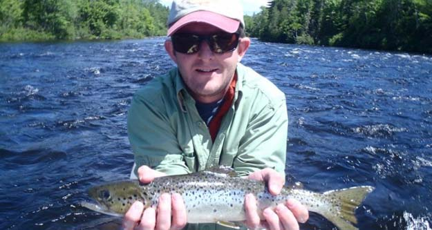Forage fish in maine showing robust numbers fly life for Maine salmon fishing
