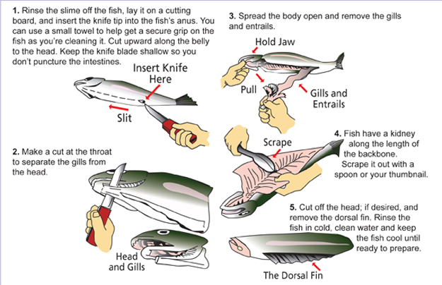 Best practices cleaning and freezing your fish fly life for Best way to freeze fish