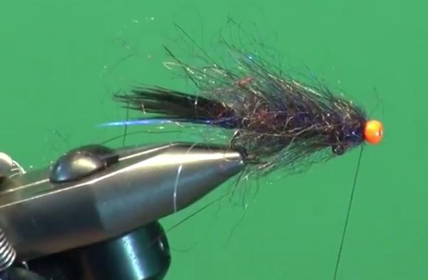 All pescados love this leech
