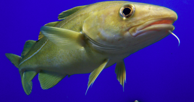 NOAA seeks $900K, all permits from Codfather in civil action