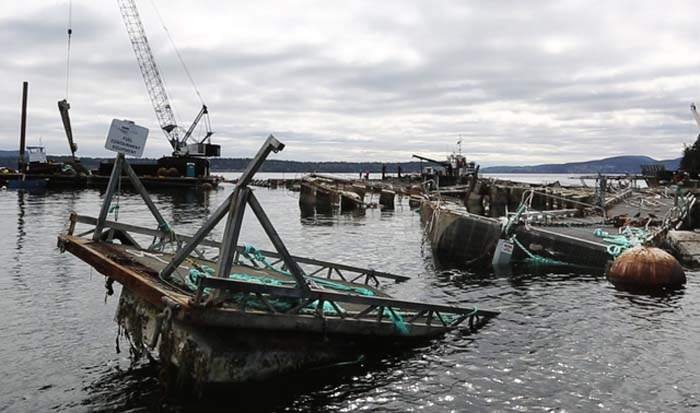 Mishap plagued open-pen aquaculture company gets evicted