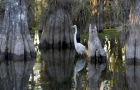 Which FL governor candidate would be best for the Everglades?
