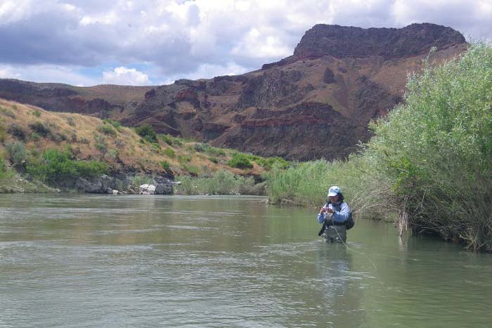 Industry news international fly fishing fair fishfest for Owyhee river fly fishing