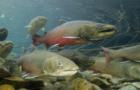 Billion-dollar Conservation Plan introduced in Senate