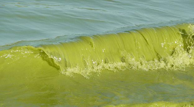 """Gov. Rick Scott """"addresses"""" FL water crisis"""