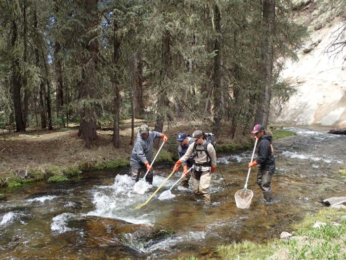 apache tribe the first conservator of nm native trout