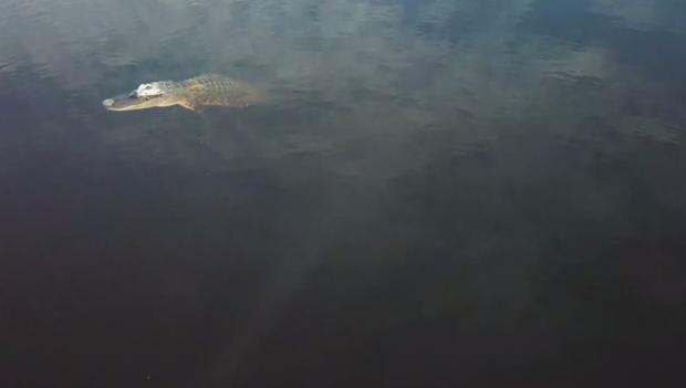 Videos: Florida Everglades 30 years of broken promises and failed legislation