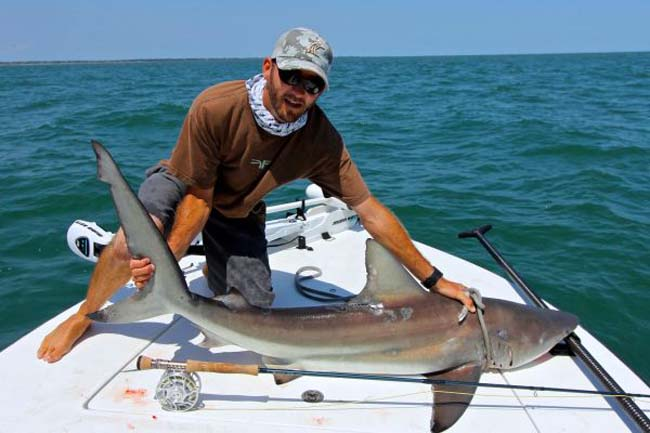 """It's Shark Week: TV's tarnished """"Discovery"""""""