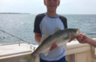 Striped Bass Management: When will we learn?