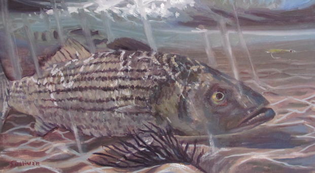 Striped bass in the Block Island Transit Zone need your voice now