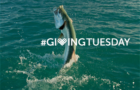 Reminder: Support BTT on #GivingTuesday