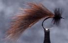Mayer's Mini-Leech: a strong swimmer