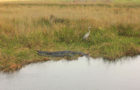 Good water management for the nation's Everglades?