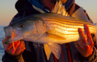 ASGA's Striped Bass 101 – Part 2