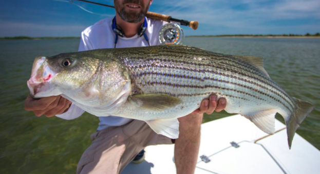 Fisheries managers vote to take action on striped bass