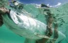 """Habitat is the future of Florida fisheries"""