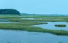 Estuaries: Nurseries of the Sea – from waterfowl to salmon, and shrimp to tarpon