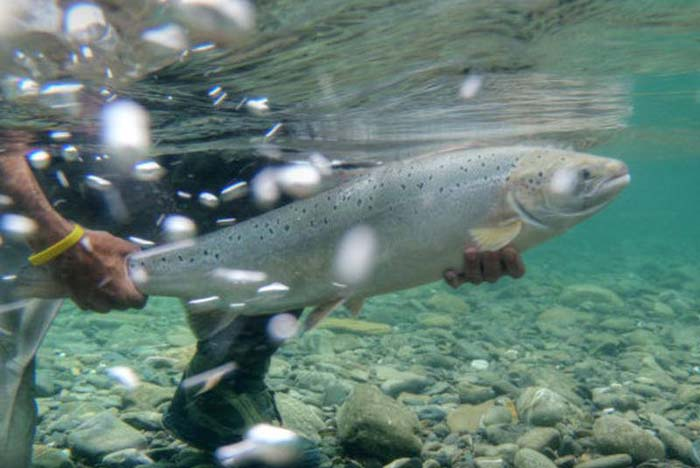 British Billionaire Buys Land in Iceland to Protect Salmon