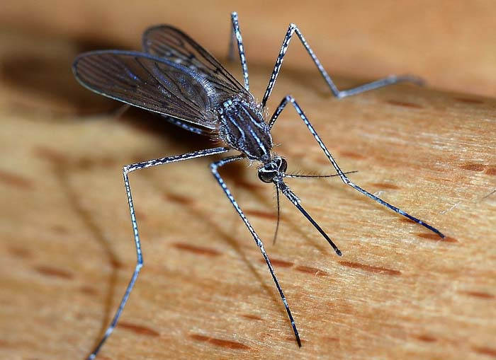 """Natural alternatives to """"DEET"""" are getting the job done"""