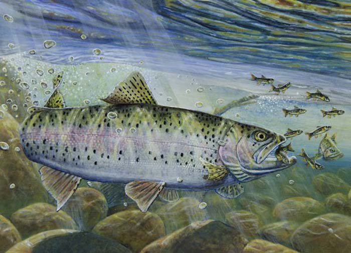 First-time winners take trout and walleye stamp contests