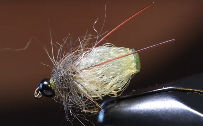 An old classic Caddis Pupa tied with modern-day materials