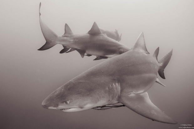 Researchers seeking anglers' shark encounter experiences