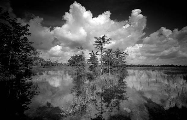 Everglades photographer raises conservation awareness