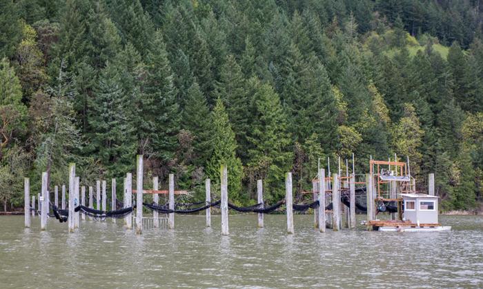 The Arctic Club Seattle: Wild Fish Soirée& BenefitAuction November 2nd