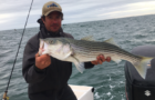 The 3 R's of striped bass