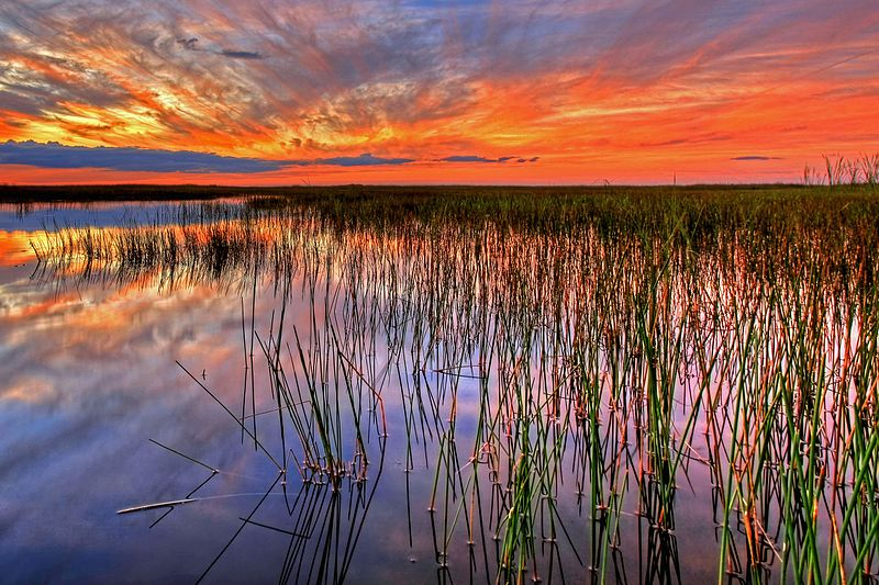 """How far we haven't come since Michael Grunwald's Everglades story """"The Swamp"""""""