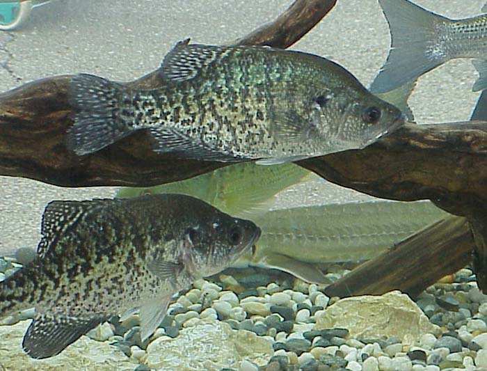 """She said: """"Crappie fishing is so much fun it ought to be done in bed"""""""