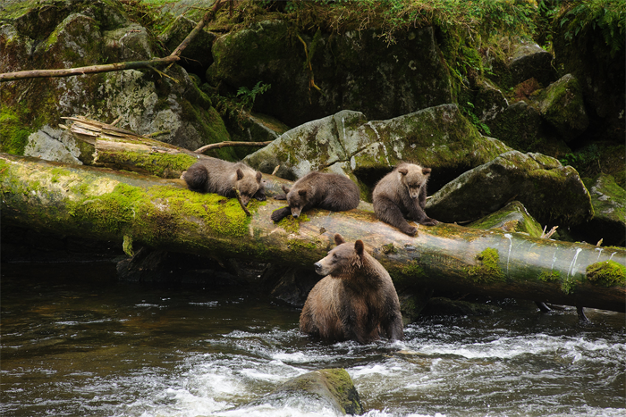 Trump, without hesitation, wants Tongass mined, logged, and developed