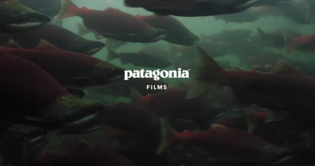 Artifishal – An important film about our global fisheries