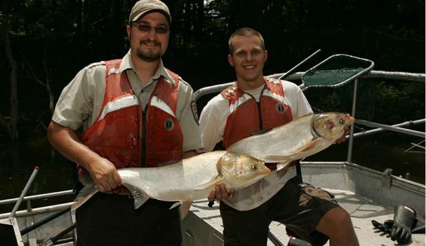 Michigan DNR pledging $8 million to Asian carp barrier in Illinois
