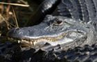 Why Everglades National Park Deserves Your Attention
