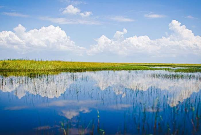 The Florida Everglades, punished for its water, brutalized for its beauty