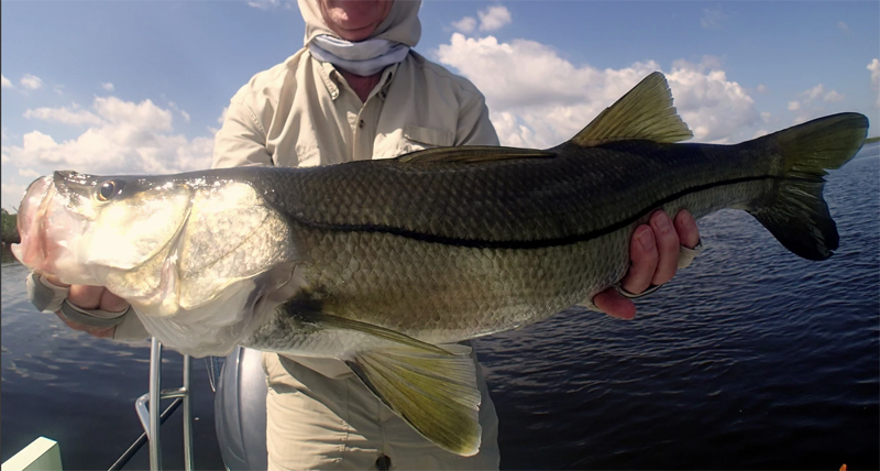 The best time of the year for beach snook approaches