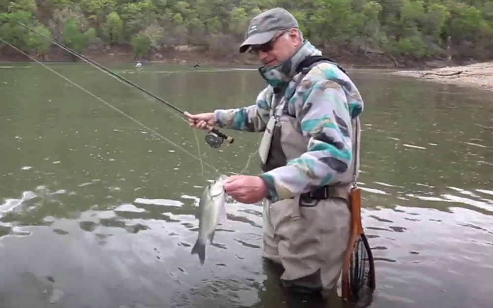 Tips & Tactics: It's White Bass Time