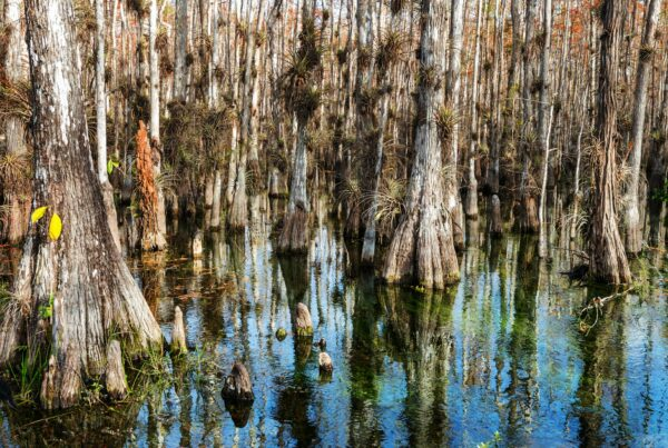 Forest in Everglades