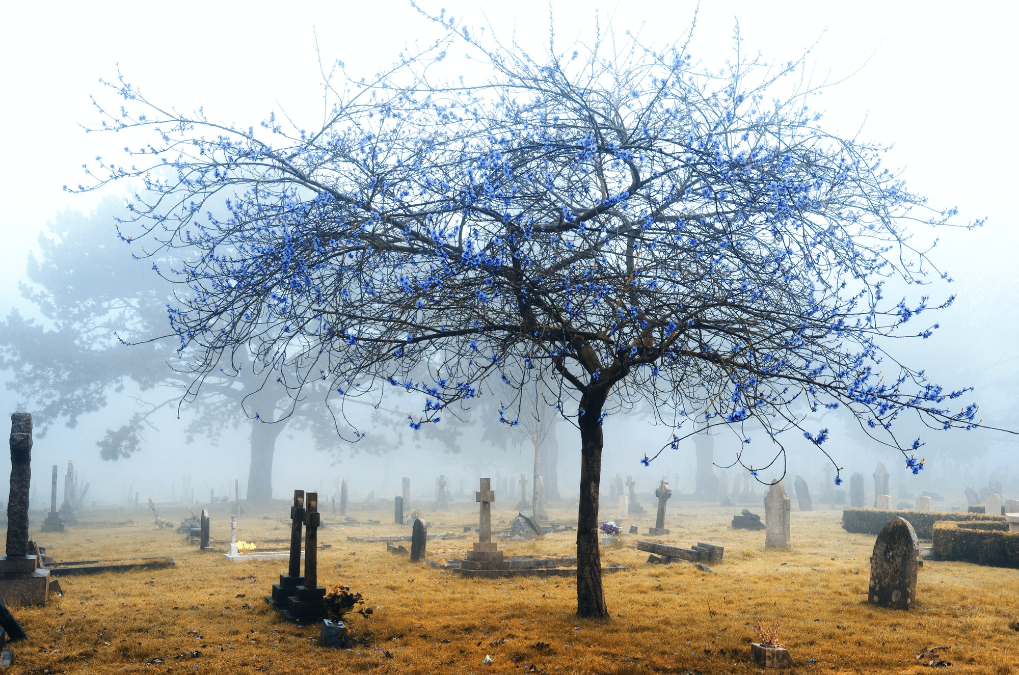 Infrared Foggy Cemetery