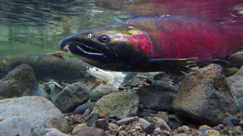 Biden Administration: Alaska Roadless Habitat to be Conserved