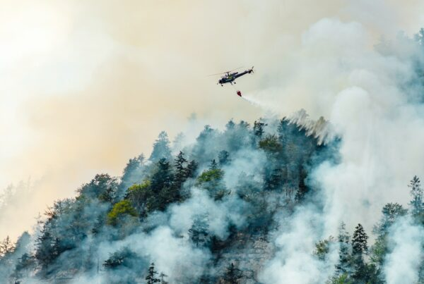 extinguishing a forest fire